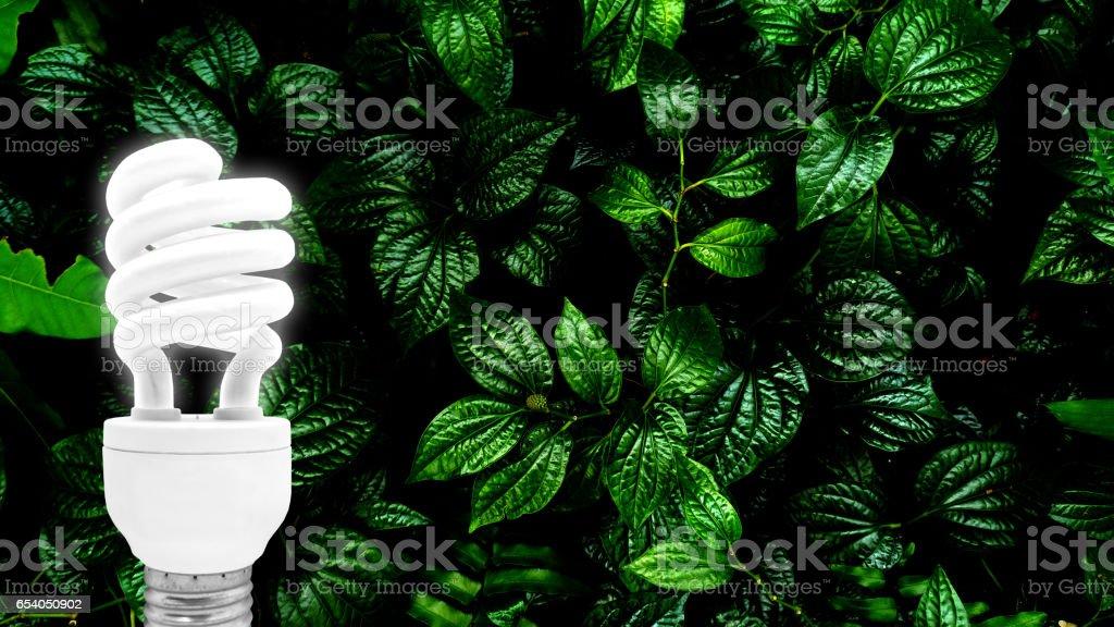 fluorescent bulb on leaf background stock photo