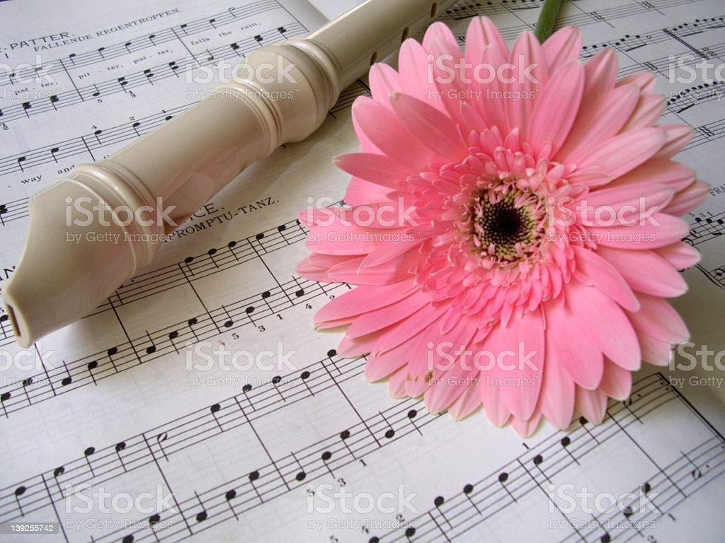 Flute and Barbeton daisy royalty-free stock photo