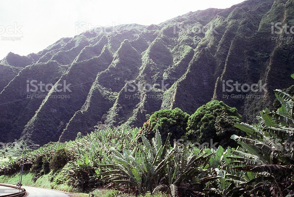 Fluted Erosional Landscape wet verdant vegetation Windward Coast Oahu Hawaii stock photo