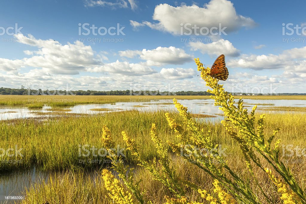 Fluttering Marsh Butterfly stock photo