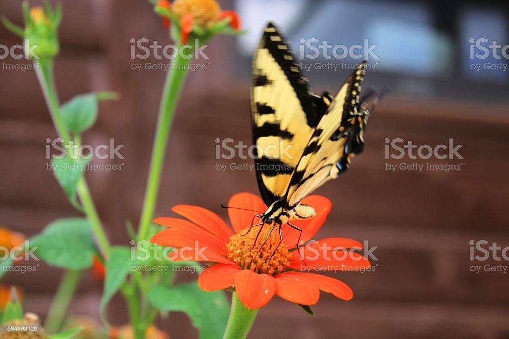 Fluttery feeding stock photo