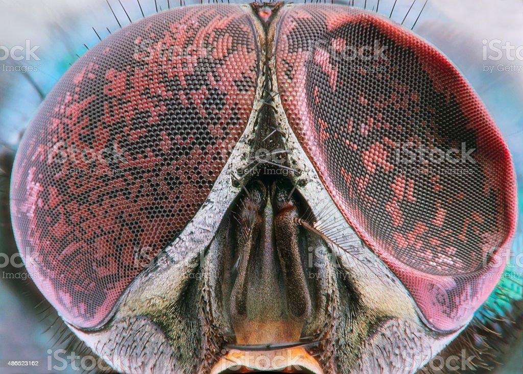 Fly extreme closeup of damaged compound eye stock photo
