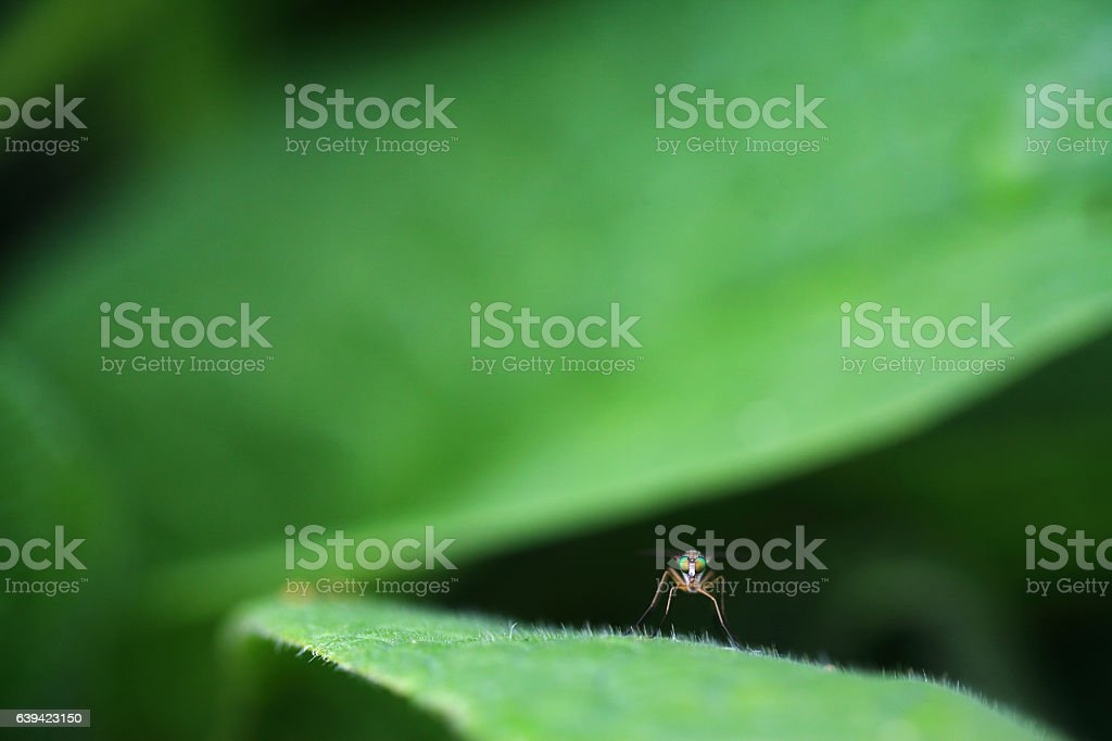 Fly Eye Insect Leaf Close-up Green stock photo