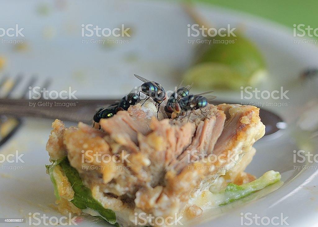 Fly Feast In Brazil stock photo