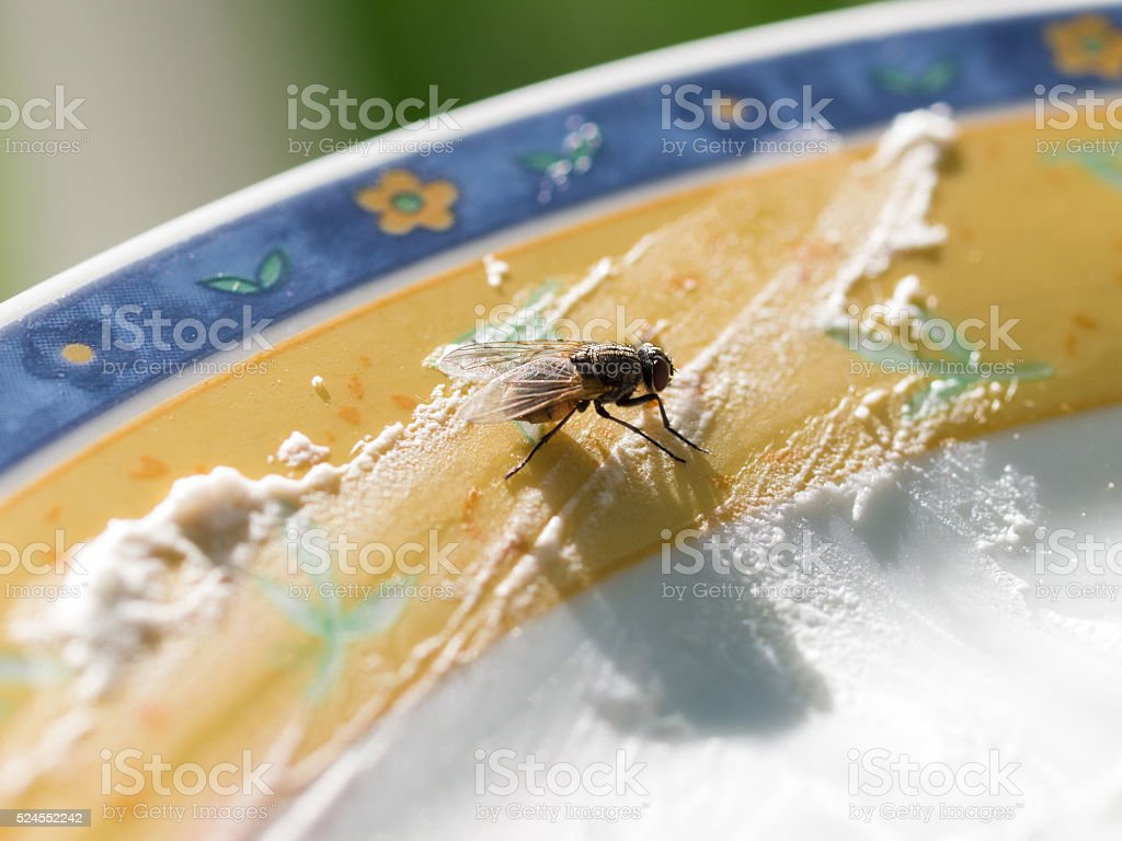 Fly feeding from rotten food royalty-free stock photo