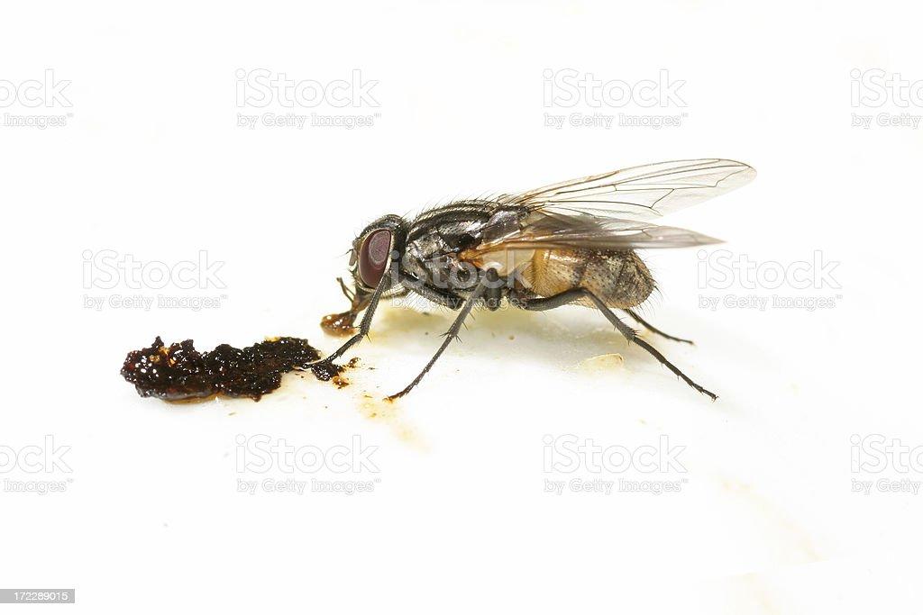 Fly feeding stock photo