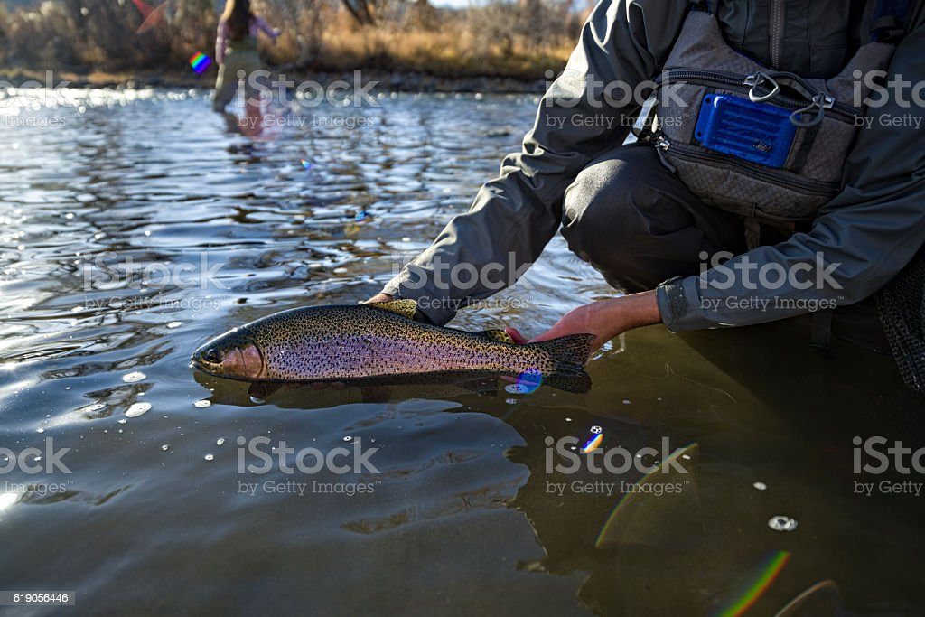Fly Fisherman Holding Caught Rainbow Trout stock photo