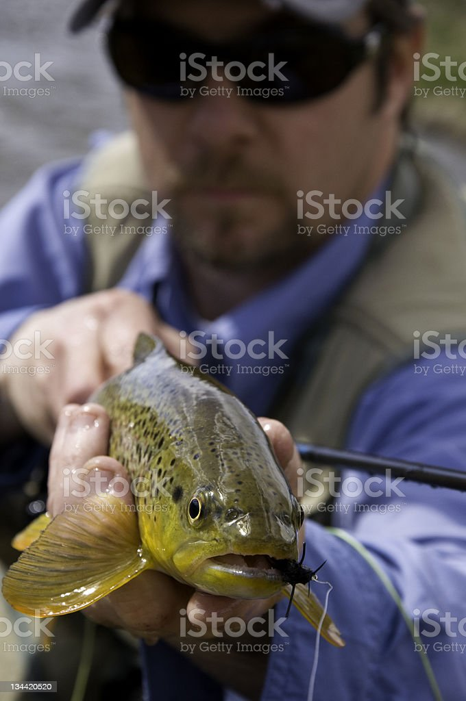 Fly Fisherman Holds Brown Trout stock photo