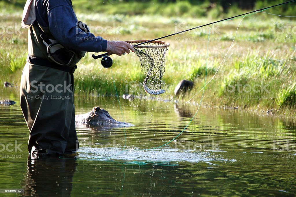Fly fisherman royalty-free stock photo
