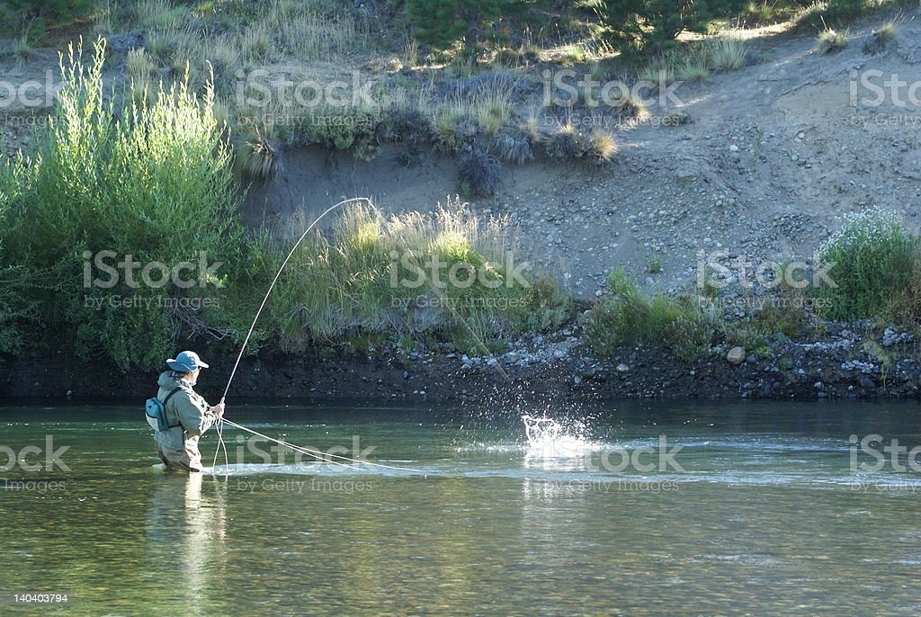 Fly fishing action royalty-free stock photo