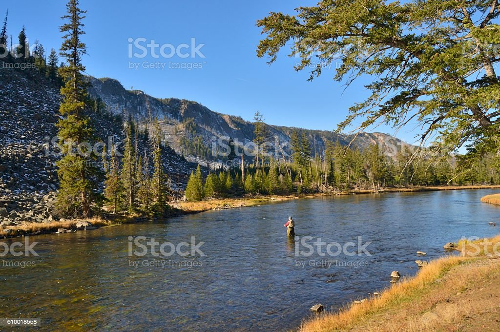 Fly Fishing in the Yellowstone River stock photo