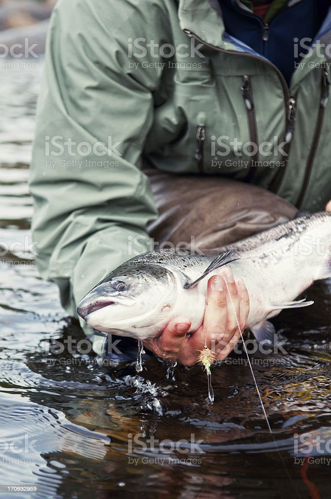 Fly Fishing royalty-free stock photo