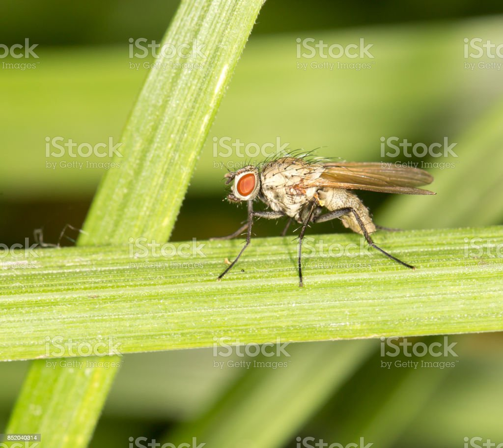 fly in nature. close-up stock photo