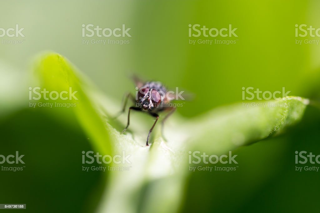 fly in nature. macro stock photo