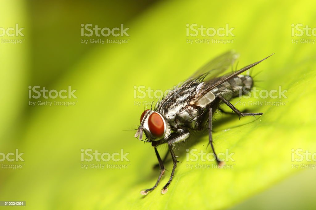 Fly insect stock photo