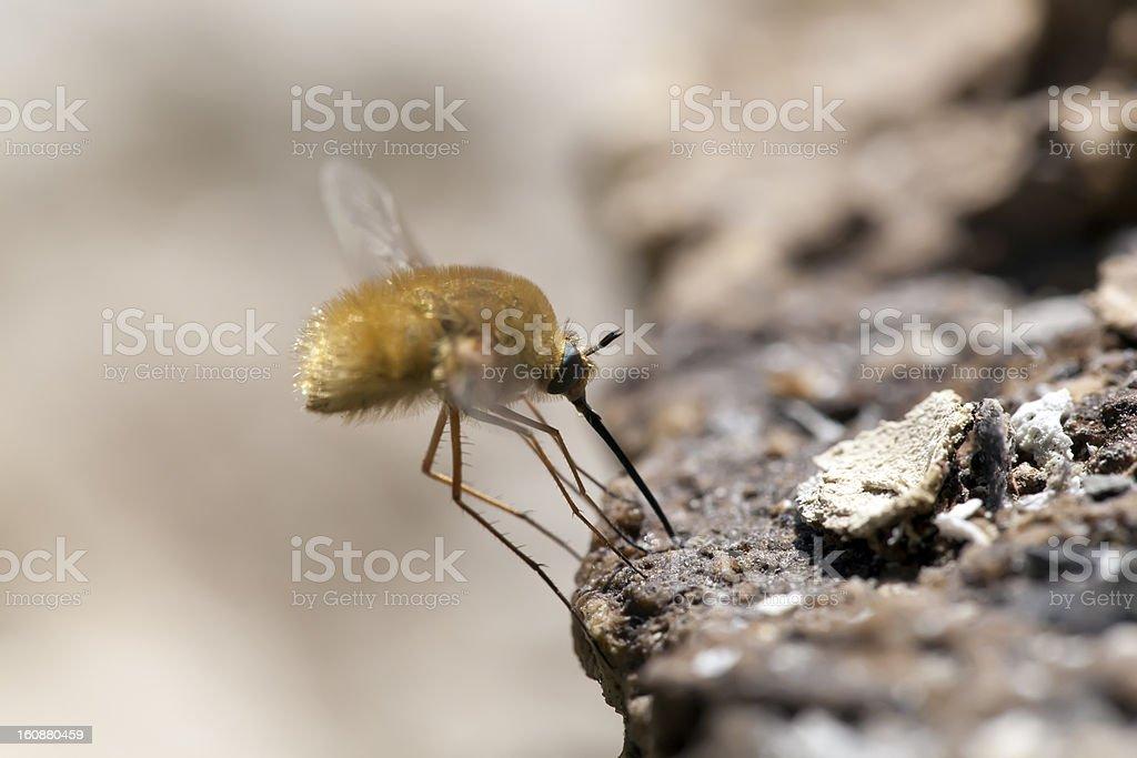 fly looks for food. Macroshooting royalty-free stock photo