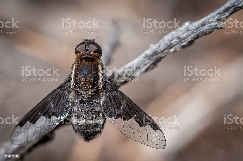 Fly On A Branch stock photo