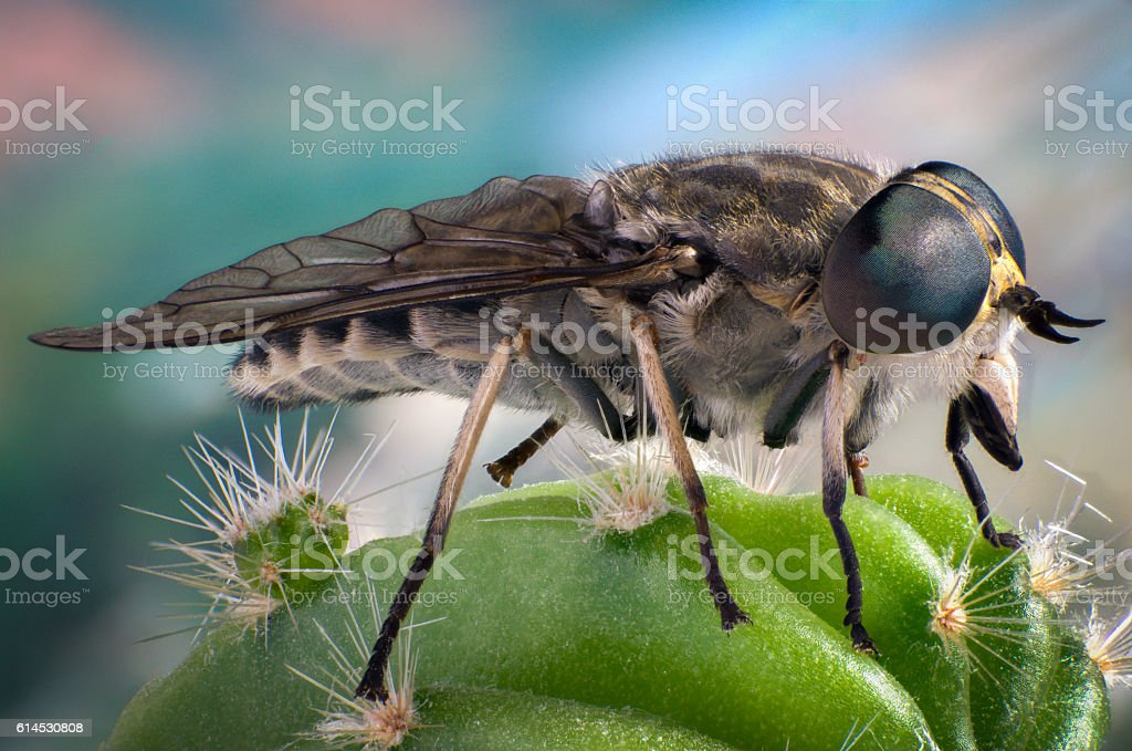 Fly on a cactus stock photo
