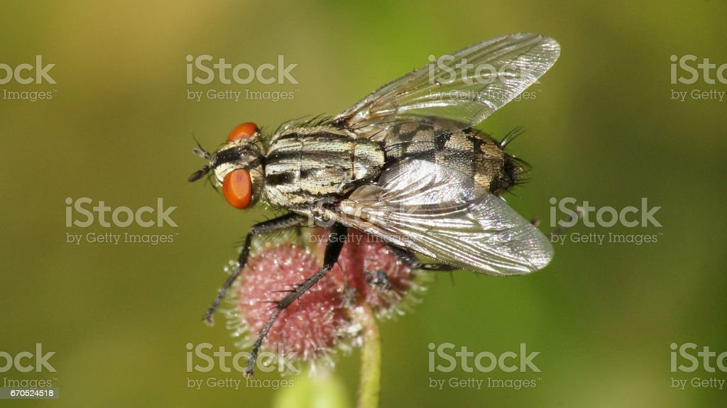 fly on a flower stock photo