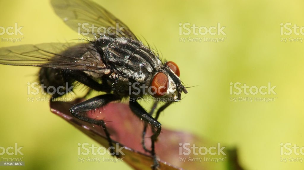 fly on a leaf stock photo