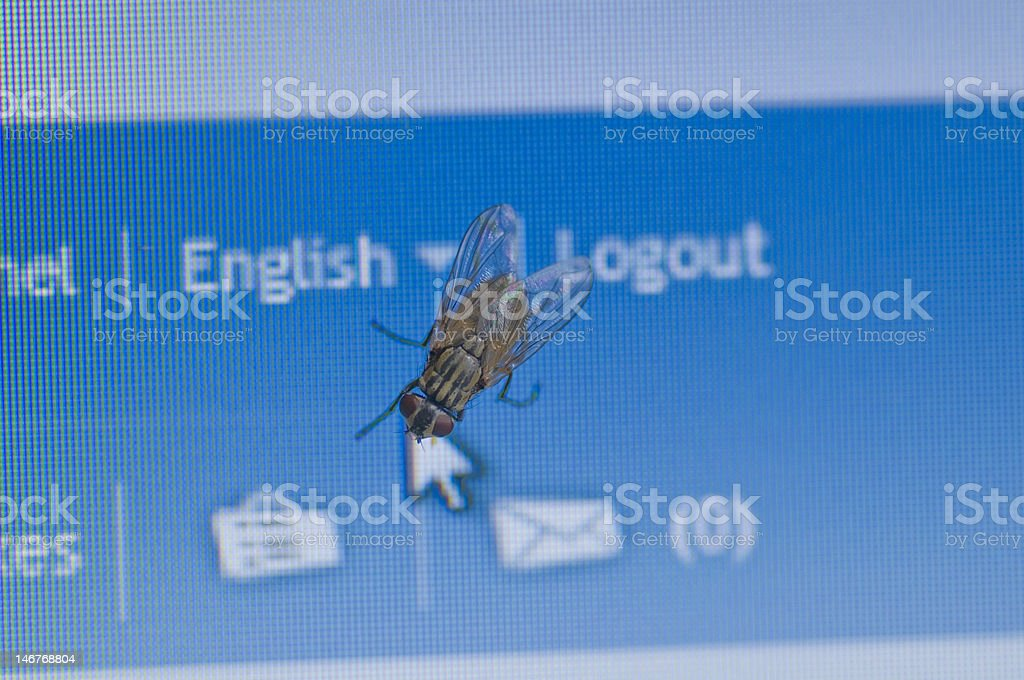 Fly on a Monitor royalty-free stock photo
