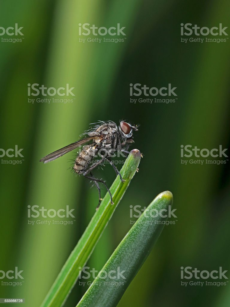 Fly on a plant leaf stock photo