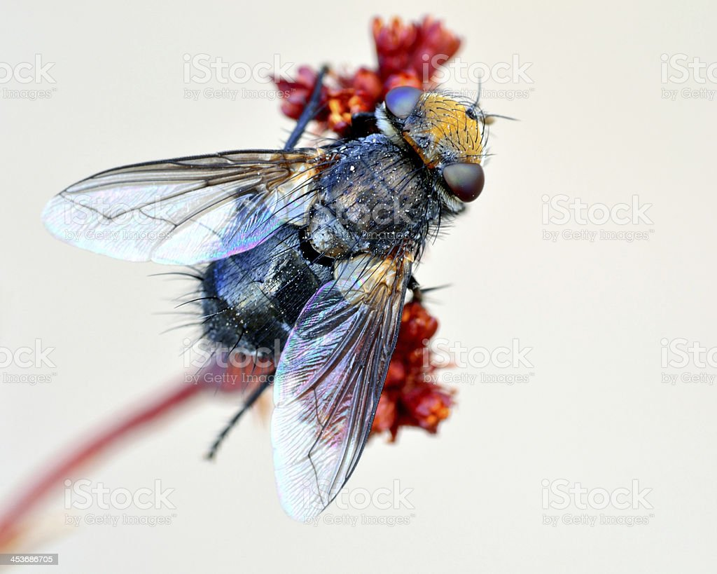 Fly On A Plant royalty-free stock photo