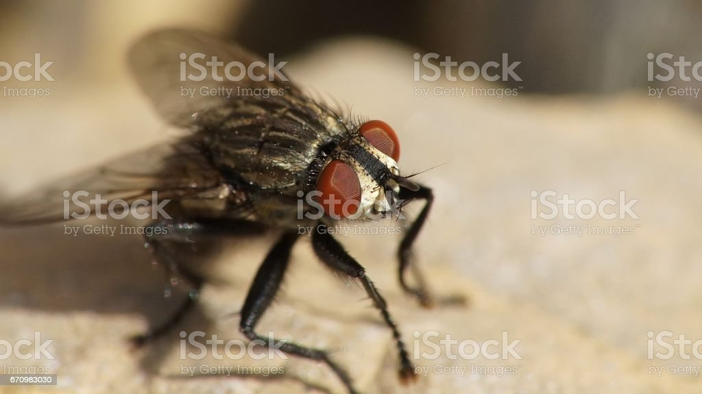 fly on a stone stock photo