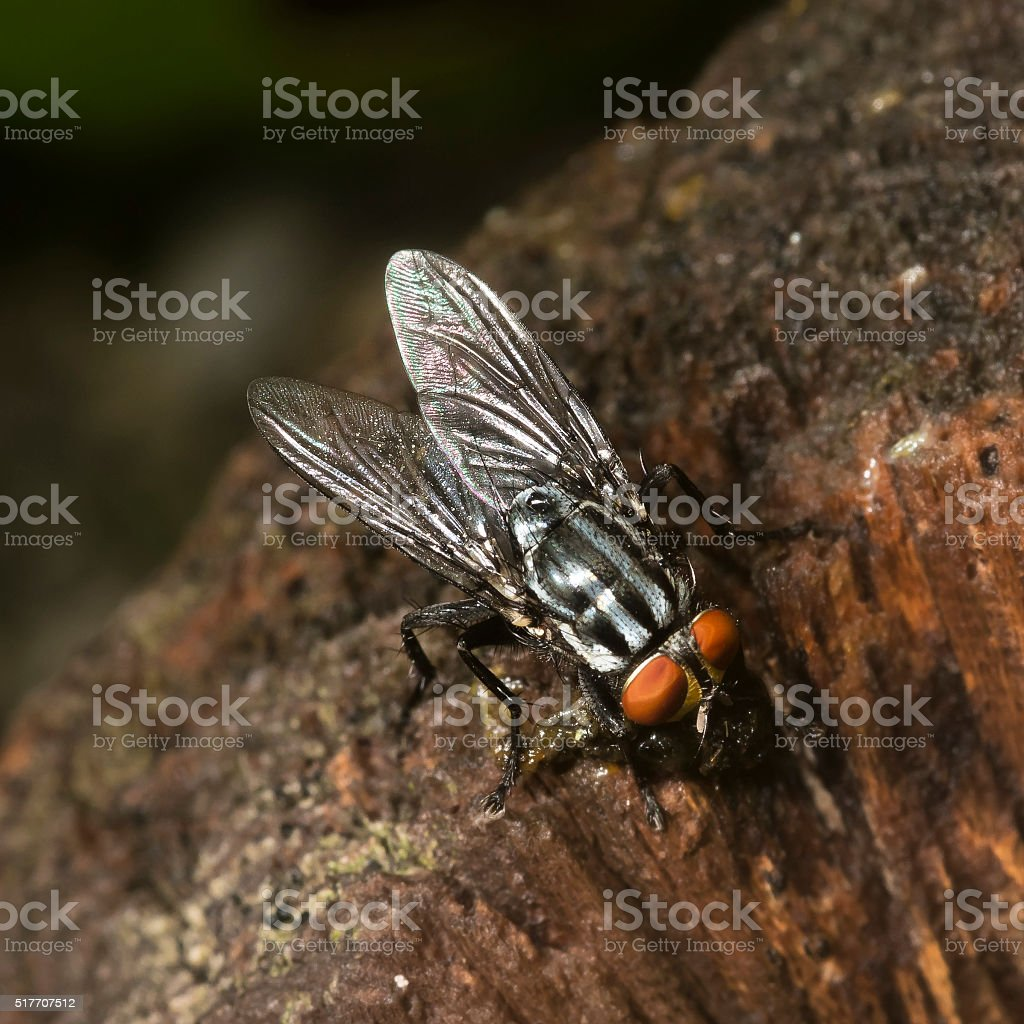 Fly on a wooden pole stock photo