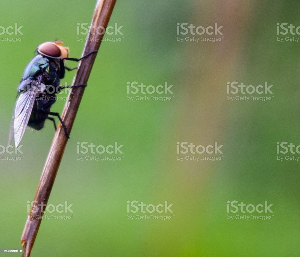 fly on dry grass stock photo