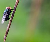 fly on dry grass
