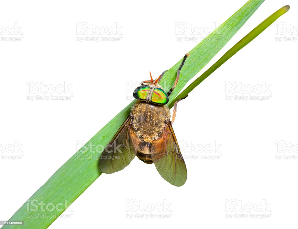 Fly on grass-blade stock photo