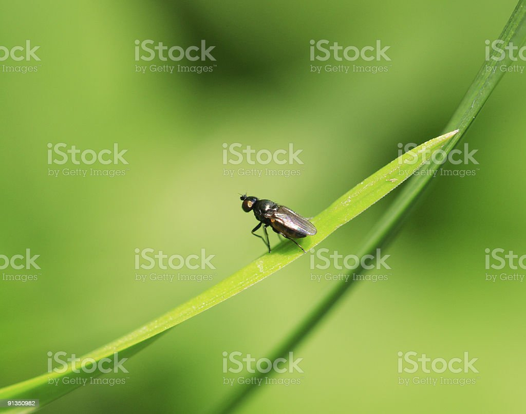 Fly on green stock photo