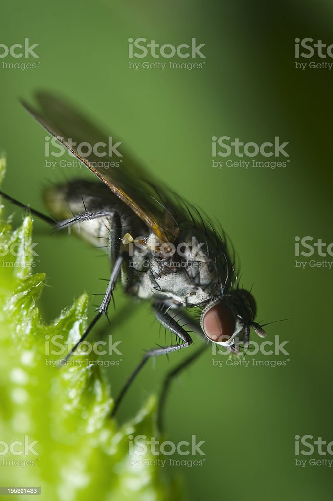 fly on green slanting royalty-free stock photo