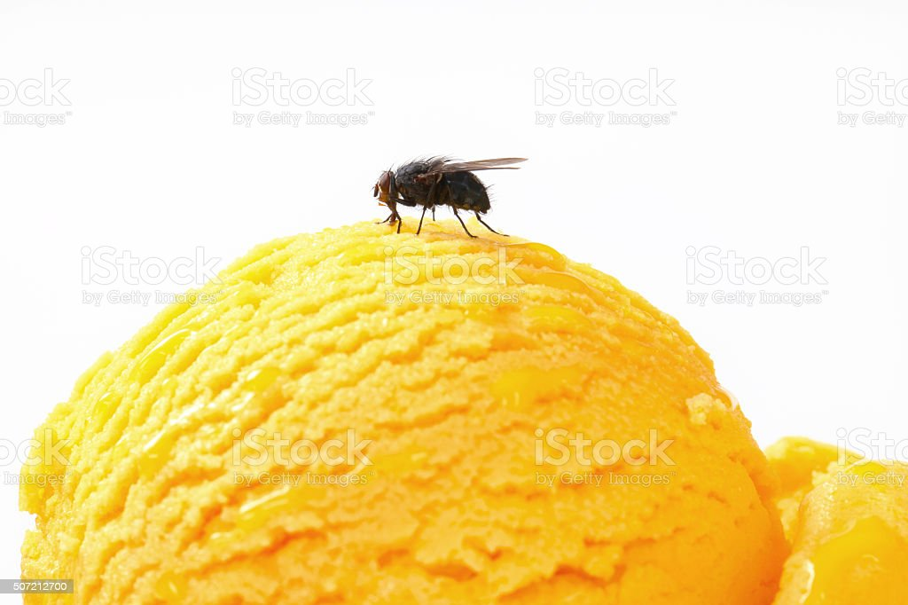 Fly on ice cream stock photo