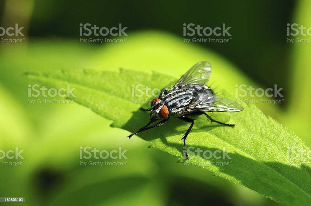 Fly on leaf with green background stock photo