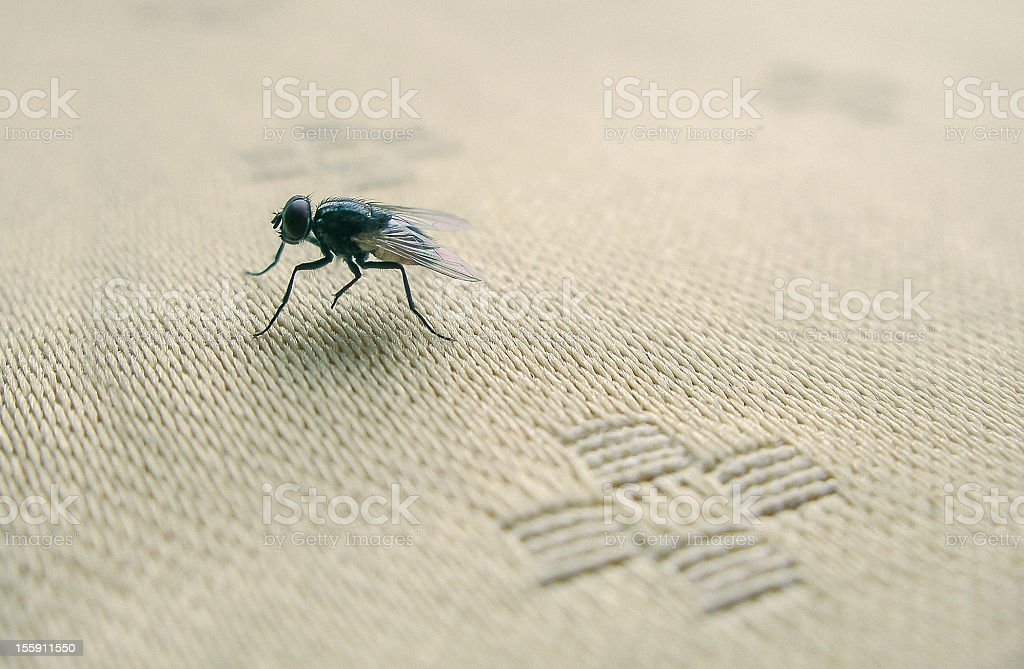 Fly on table royalty-free stock photo