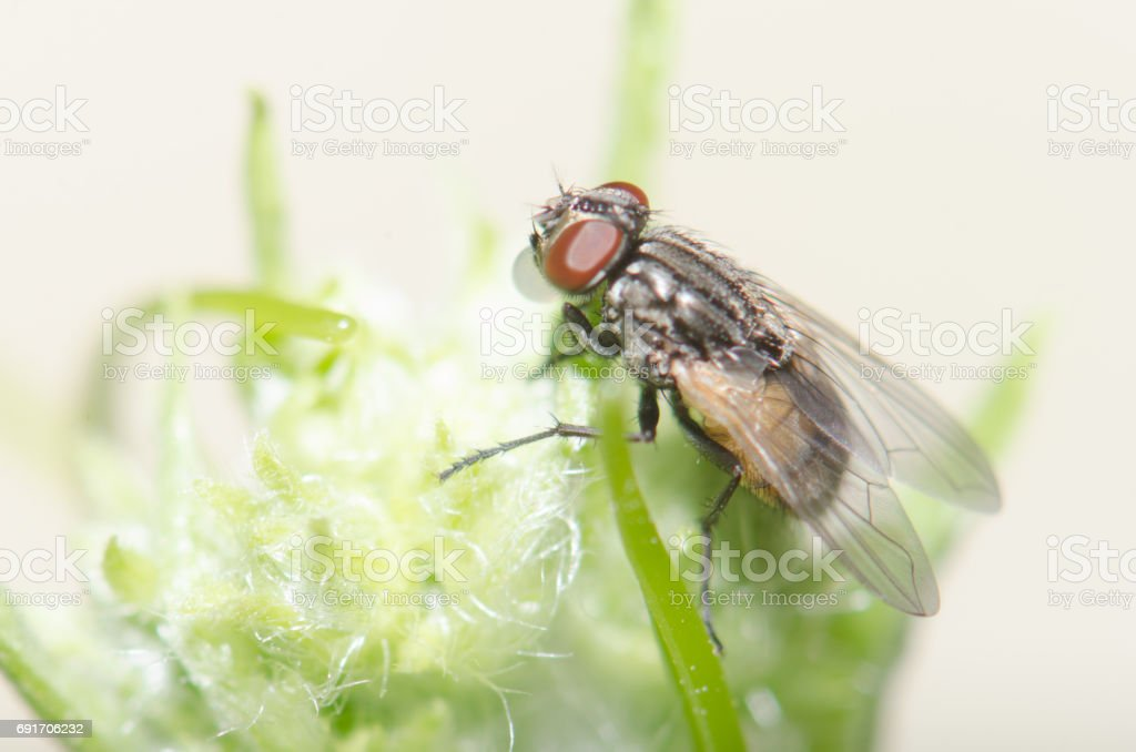 Fly on the grass and leaves. stock photo
