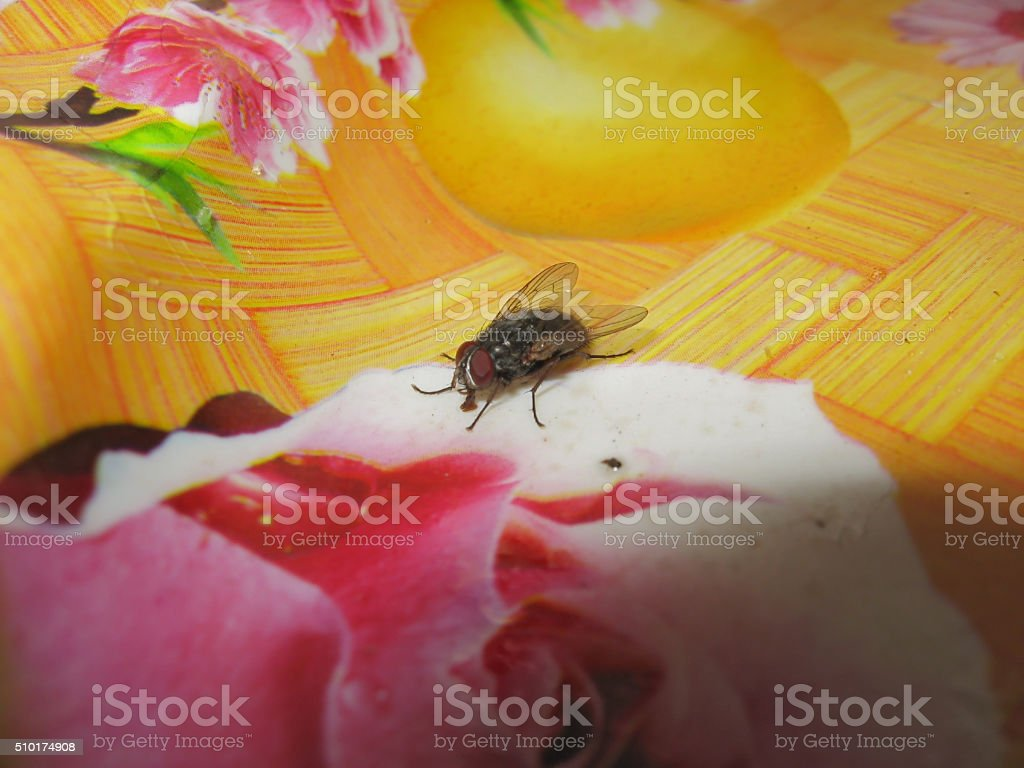 Fly on the table cloths stock photo