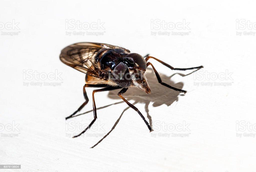 fly on white background stock photo