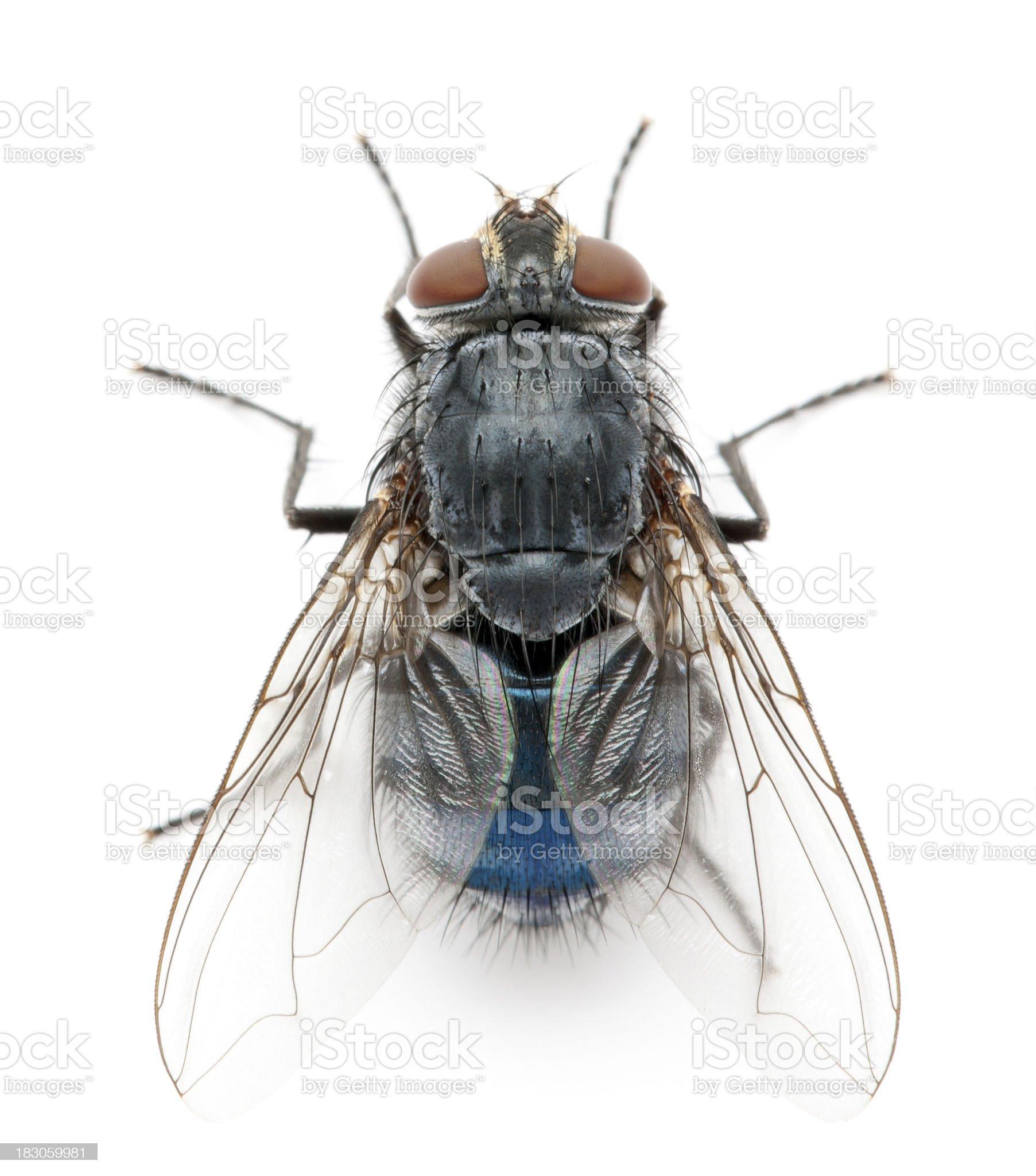 fly royalty-free stock photo