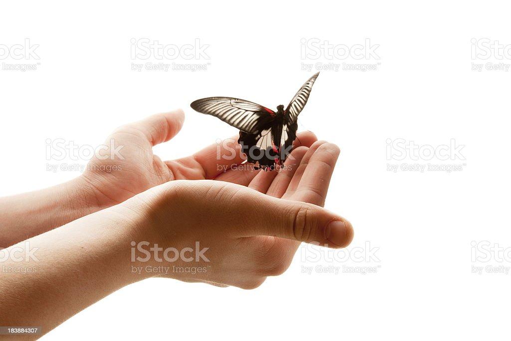 Fly! royalty-free stock photo
