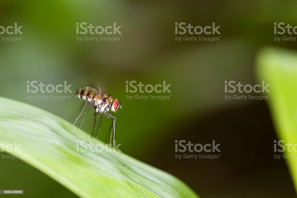 Fly (Insect) stock photo