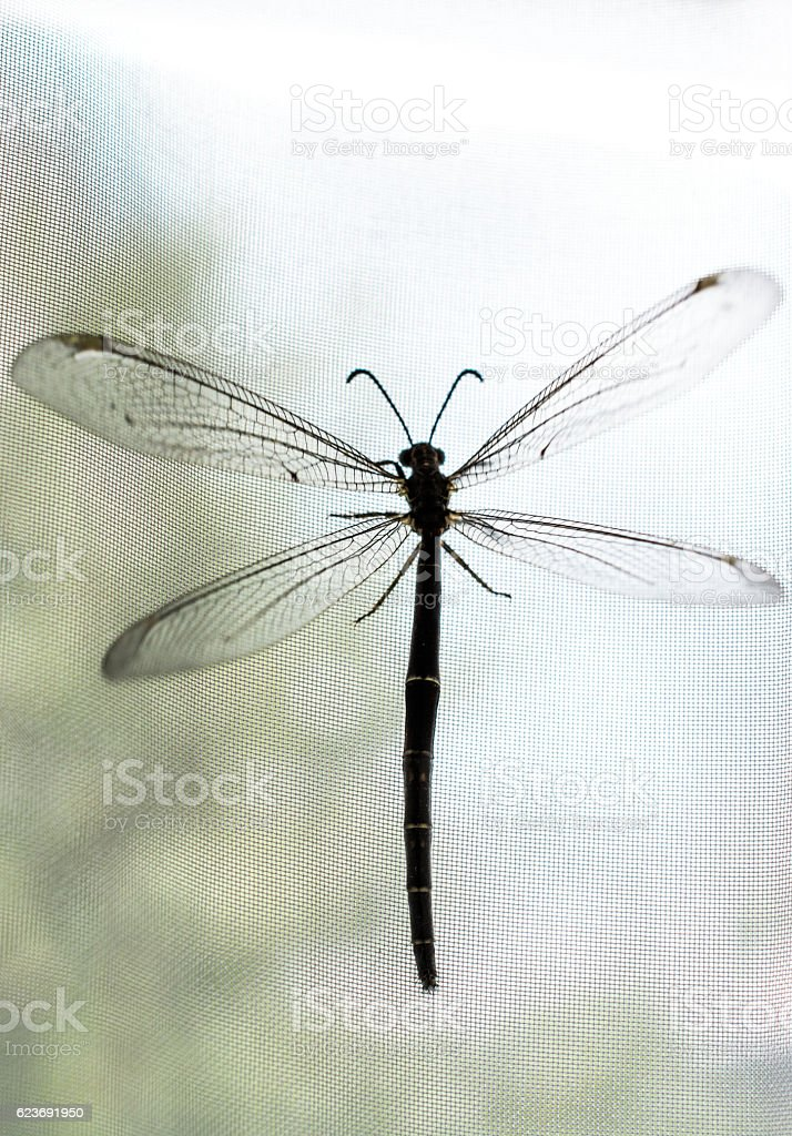 Fly resting on window curtain stock photo