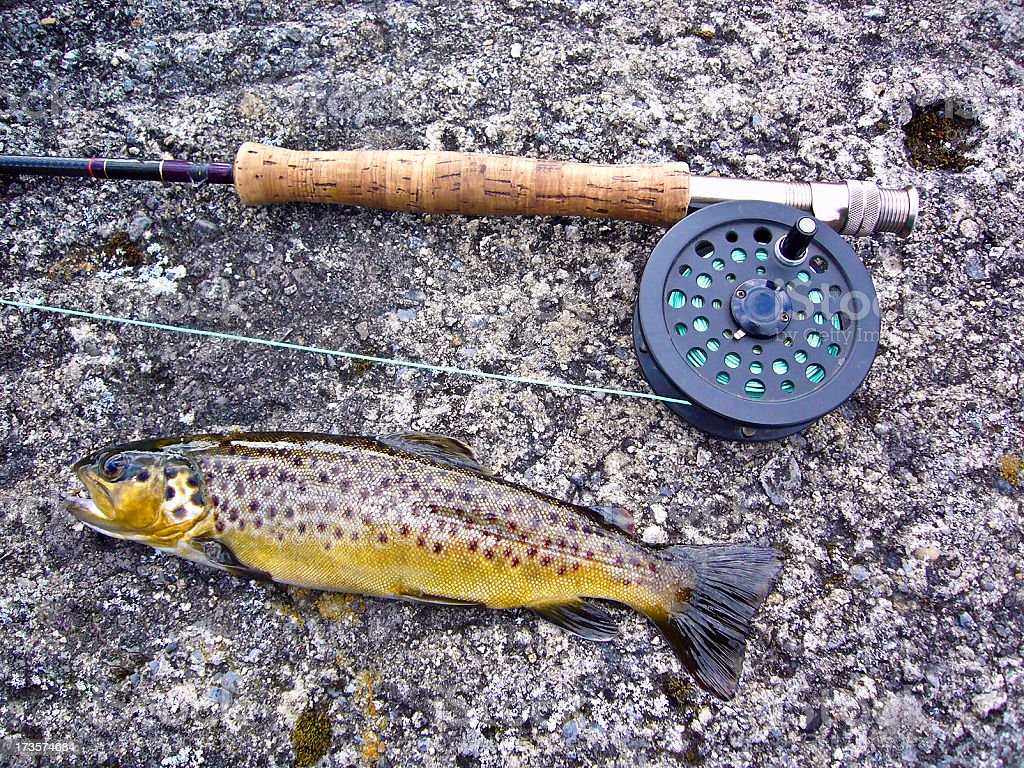 Fly rod with Irish Brown Trout caught in lake royalty-free stock photo