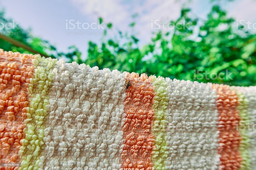 fly sitting on a bath towel royalty-free stock photo