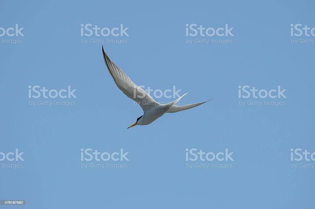 Fly the blue sky royalty-free stock photo