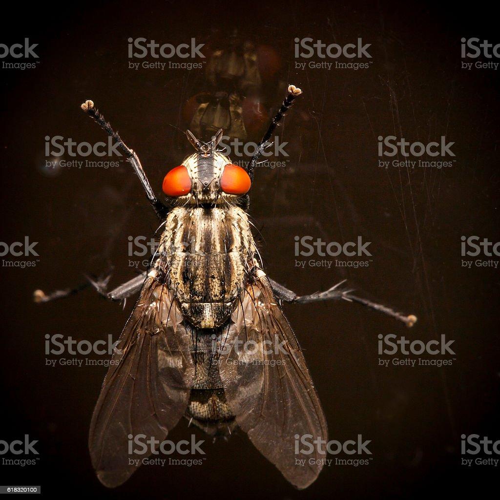 Fly with orange eyes stock photo
