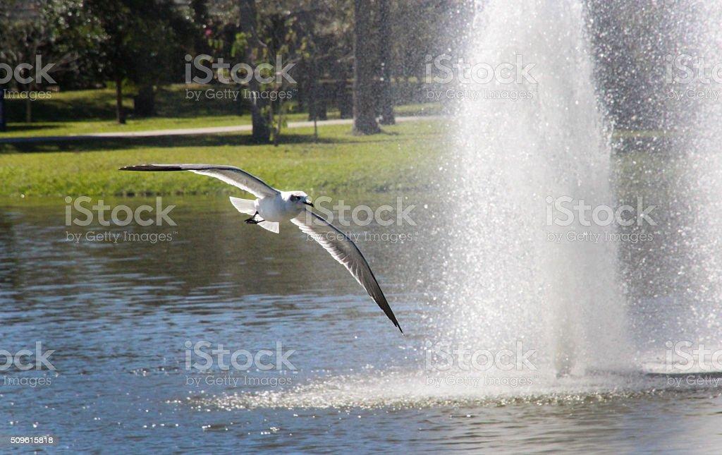 flyby stock photo