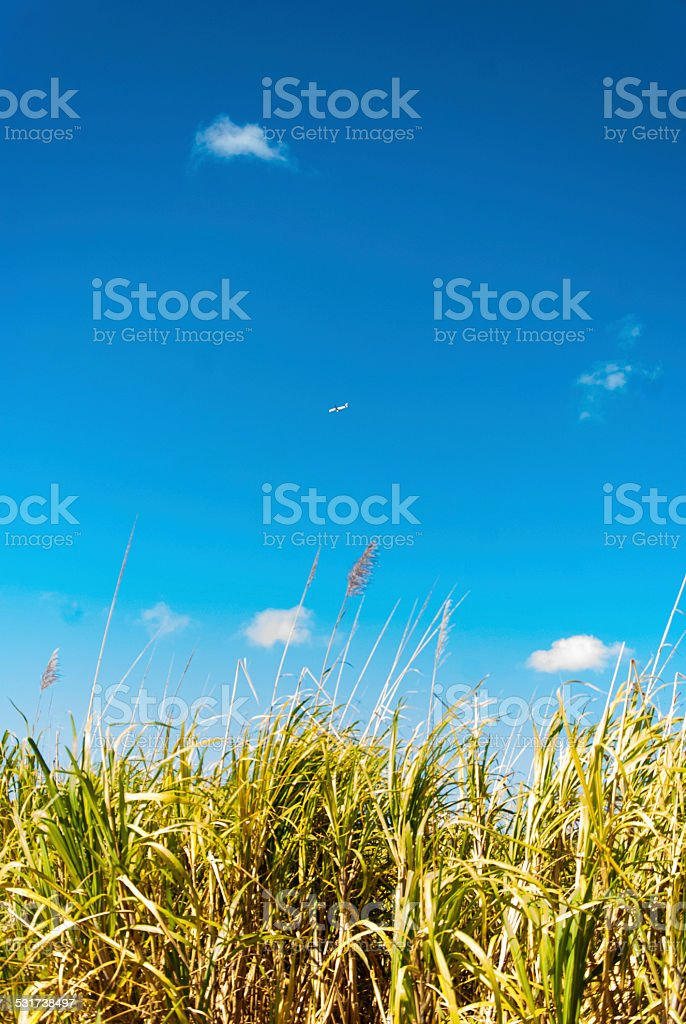 Flying above royalty-free stock photo